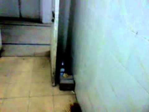Benazir Hospital Rawalpindi.wmv