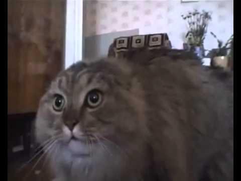 NONONONO Cat
