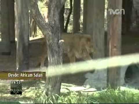 Perros guía para sordos - TVCn Ambientales desde Africam Safari