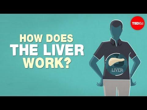 شاهد بالفيديو..ما هو عمل الكبد في جسم الإنسان