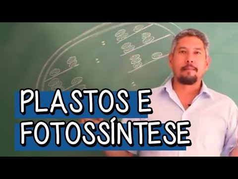 Biologia - Plastos e Fotossíntese: Plastos