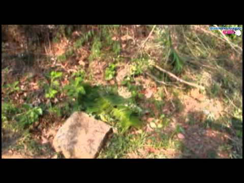 Tala ilegal en la reserva natural El triunfo, centro de la sierra madre