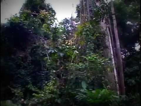 Desarrollo sostenible en el Amazonas