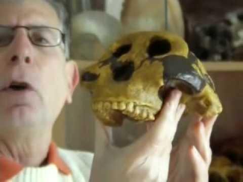 Dai Miti alla Scienza- Davide Castelli e gli antenati dell'uomo..mp4