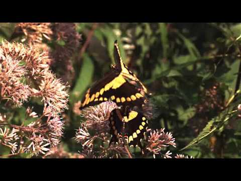 Butterfly flight in slow motion