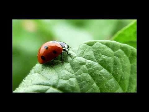 La Ecología y el Medio Ambiente