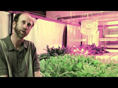 Vertical Farming and Aquaponics at The Plant in Chicago