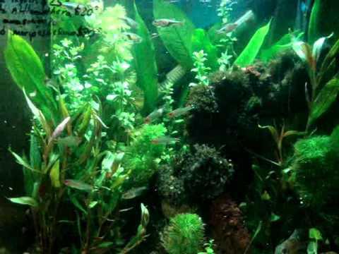 Acuario Oaxaca: Biosfera