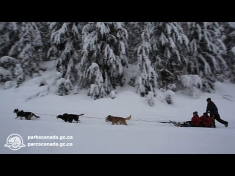 Dog Sled Mail Run In Glacier National Park