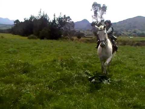 caballos toreros el niño rejoneador johao de Ecuador