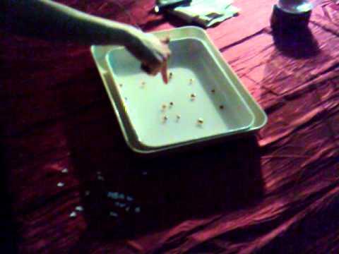 Esperimenti di Fisica del 700: Forze Elettrostatiche