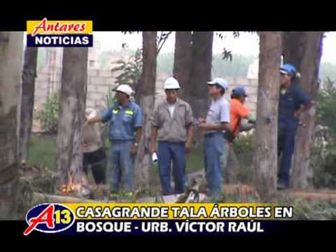 EMPRESA CASAGRANDE TALA DE ÁRBOLES DE BOSQUE