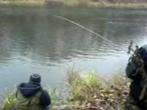 северский донец ловля сазана