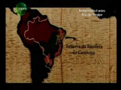 Tom da Caatinga - Ecologia Parte I