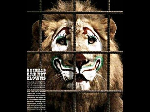 CIRCUS CRUELTY - Animal Performer Life Behind the Red Curtain- ANIMAL DEFENDERS INTERNATIONAL ADI