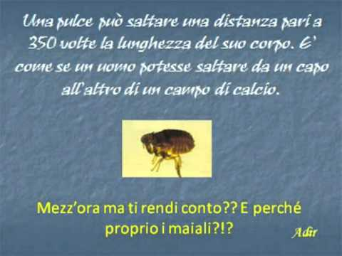 Scoperte scientifiche.mpg