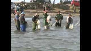 Botos ajudam na pesca da tainha em Laguna