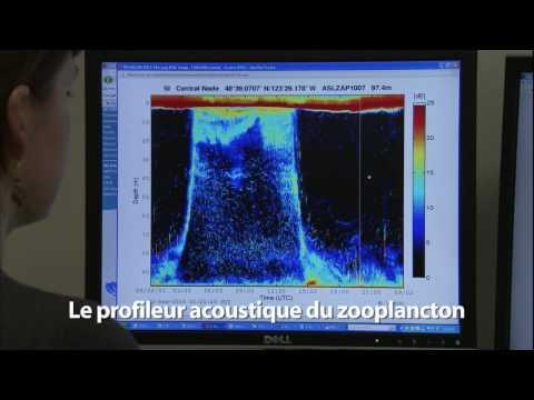 (Sous-titrée) Le zooplancton et l'observatoire VENUS