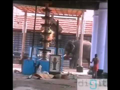 Elephant attack in kerala -xvNi4IO06Lg