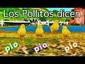 Los pollitos dicen pio pio pio - Canciones Infantiles - Videos Educativos para Niños #
