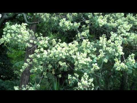Laurel en el jardin de la casa