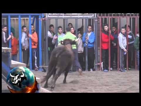 2014 02 06 SALSADELLA JAVIER TARREGA EL GALLO