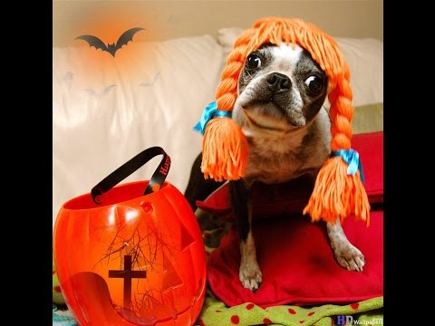 Animals In Halloween Costumes