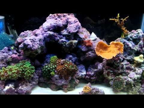 How to cycle saltwater tank/best way Other rock that can be used in saltwater tanks