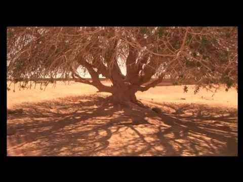 The Blessed Tree - A Documentary (Ten Thousand Films) Unofficial Trailer