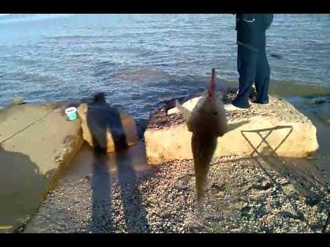 обучающее видео о рыбалке летом