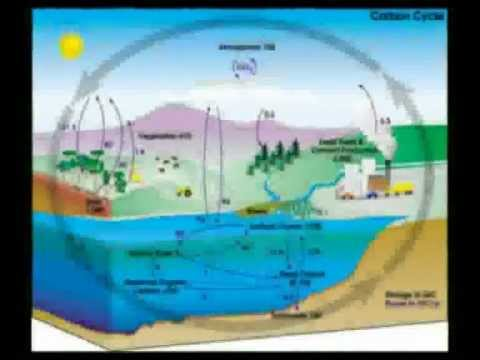 Nitrogen process Hindi Bkisan.flv