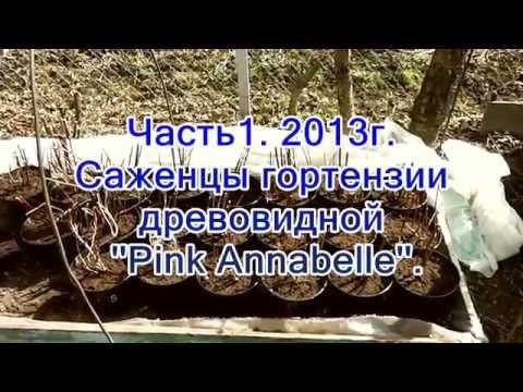 Гортензия древовидная купить саженцы в Москве