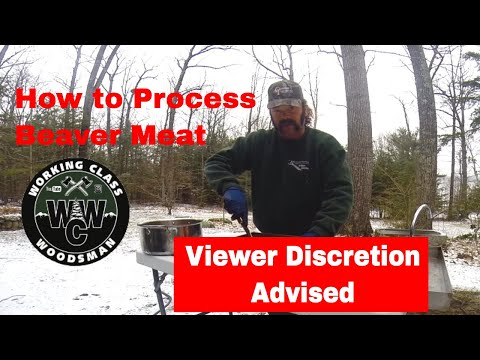 PROCESSING A BEAVER FOR MEAT AND THE TABLE
