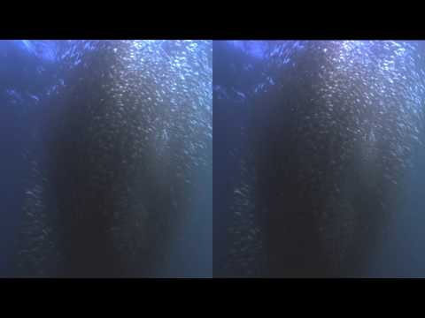 YT3D:enable=true Wild Ocean IMAX 3D Test