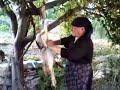 κυνηγι λαγου στην Κρανια