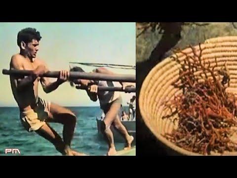 Aspetti della Sardegna N° 5 - Pescatori di corallo /1955 [Istituto LUCE]