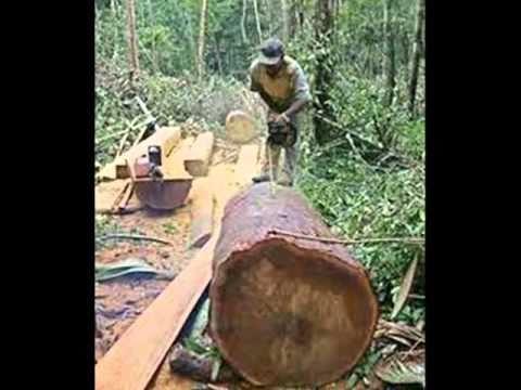 deforestacion en chaco