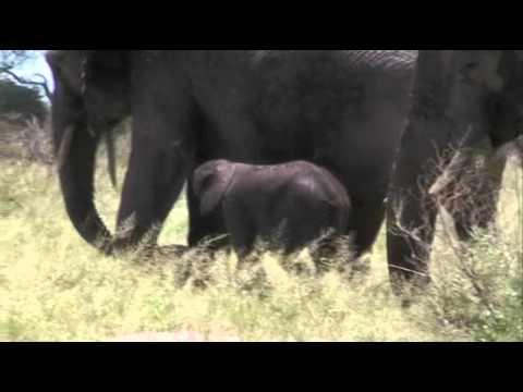 Africa - Pequeña Fauna Africana
