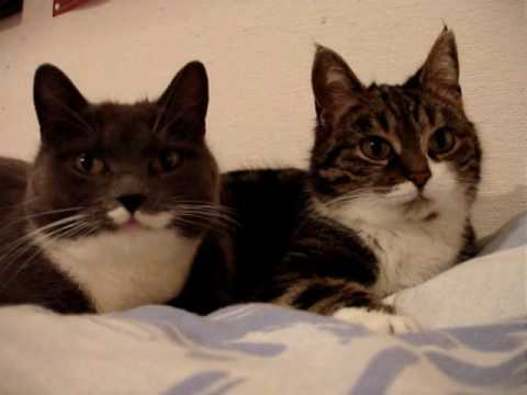 Zwei Katzen unterhalten sich