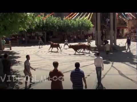Aldeanueva de ebro vacas 26 agosto 2012
