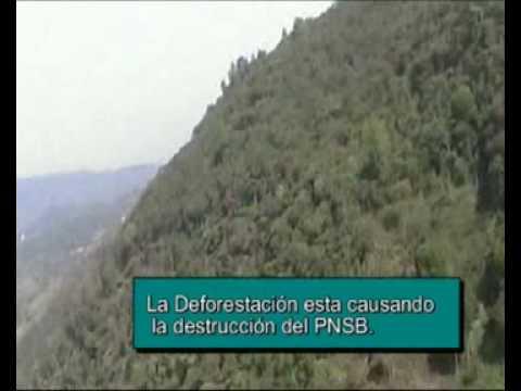 EL PNSB, (NEFOS) Video Deforestacion, 2009 2011. - Parque Nacional Santa Bárbara