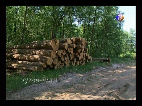 Ущерб отнезаконных вырубок вВыксе превысил 8млн рублей