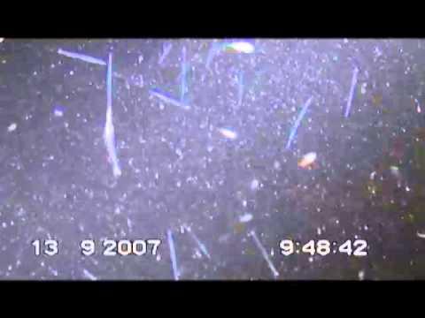 Zooplancton.mp4