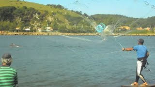 Pesca de Taínhas com auxilio dos Botos em Laguna Santa Catarina