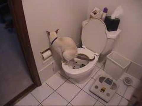 Katze geht auf die Toilette
