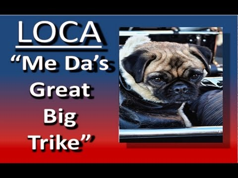"Loca the pug sings ""Me Da's great big trike"""