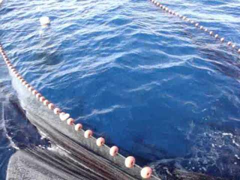 Giornata di Pesca alla Lampuga...Sant'Angelo d'Ischia_Hotel Villa Tre Sorelle