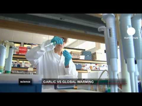 euronews science - L'aglio contro l'effetto serra