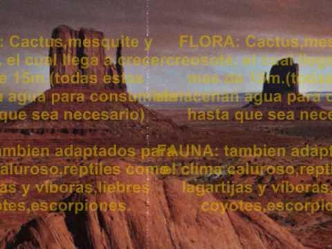 Diferentes tipos de Biomas (Ecosistemas) - [UAEH P4]
