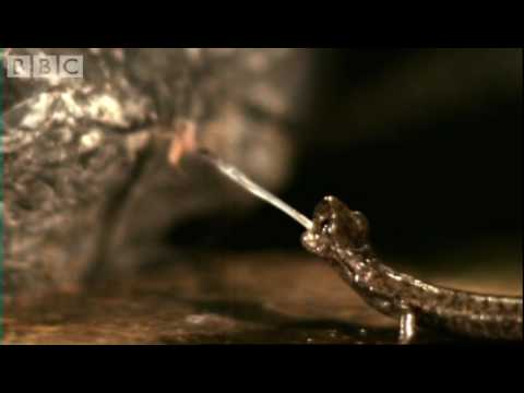 Fastest animals on Earth in slow motion - Animal Camera - BBC